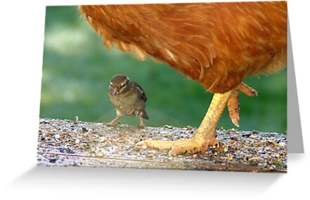 Pleeeese! Don't Step On Me!! - I'm Only Little! - Sparrow - NZ by AndreaEL