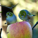 Eating Our Way ThroughThe Big Apple! - Wax-eye - NZ by AndreaEL