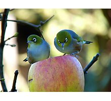 Eating Our Way ThroughThe Big Apple! - Wax-eye - NZ Photographic Print