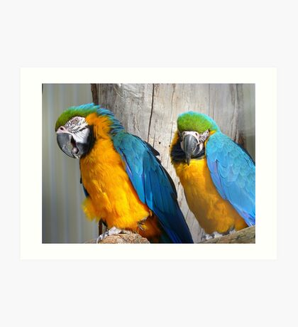Oooh! - It's On The Tip Of My Tongue! - Macaw - NZ Dunedin Art Print