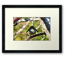 Do I look Like Happy Feet The Penguin? - Silver-Eye - NZ Framed Print