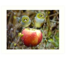Who'll Stop the Rain From Falling Down On Us? - Silvereyes-NZ Art Print