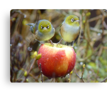 Who'll Stop the Rain From Falling Down On Us? - Silvereyes-NZ Metal Print