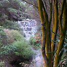 Rain forest Waterfall by oiseau