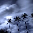 Hawaiian Palm Trees at Night by Bass Sears