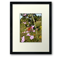 Gulf Fritillary in Purple Gerardia Framed Print