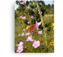 Gulf Fritillary in Purple Gerardia Canvas Print
