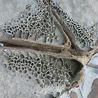 Eroded Rockface by jensw61