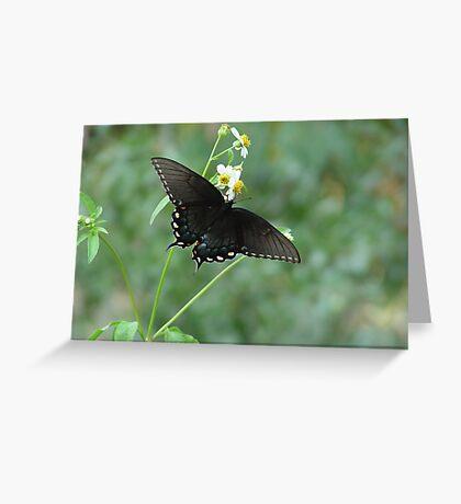 Tiger Swallowtail in Bidens alba Greeting Card