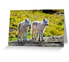 Pair of Arctic Wolves - Montebello, Quebec  Greeting Card