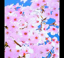 Cherry Blossoms iPhone / Samsung Case by Tucoshoppe