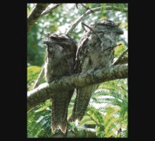 Tawny Frogmouths # 1 by Virginia McGowan