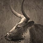 Texas Longhorn by Paul  Huchton