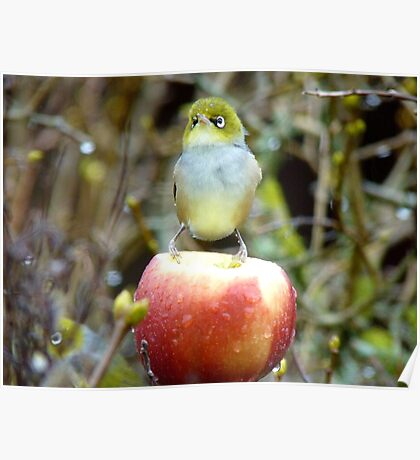 Geeez..It's Freeeezing Out Here!!! - Silvereye - NZ Poster