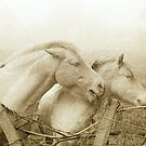 Onlookers 3 ~ horses on a misty morning by ragman