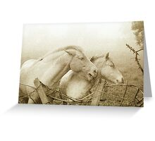 Onlookers 3 ~ horses on a misty morning Greeting Card