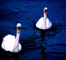 swan lake by Kacholek