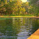 Ducks N Trees by Daniel Rayfield