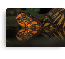 Eastern Box Turtle Canvas Print