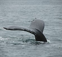 whale tail by Laurens