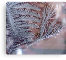 Forest in the Frost Canvas Print