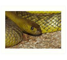 The Worlds Deadliest Land Snake. Art Print