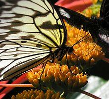 Butterflies I by Beth Ihms