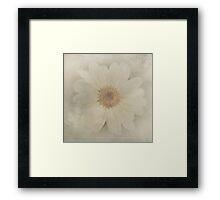 Vintage Painterly White Daisy  Framed Print