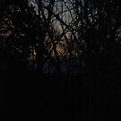 Morning First light by rarmermann