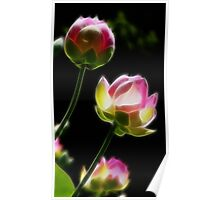 Stained Glass Lotus Poster