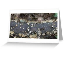 HDR Composite - Bracket Fungus on a log 2 Greeting Card