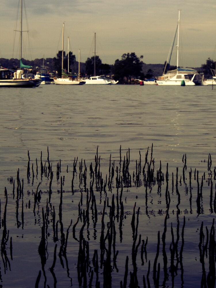 Lake Macquarie  by Mathew Reed