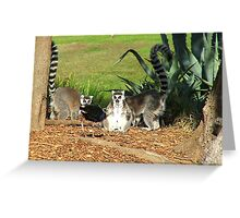 I've Come To Beg Forgiveness King Julien XIII !!! - Lemur  Greeting Card