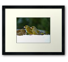 Aghhh!!..Iced Seed... I Guess It's Better Than None!! - Green finches snow Framed Print