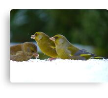 Aghhh!!..Iced Seed... I Guess It's Better Than None!! - Green finches snow Canvas Print