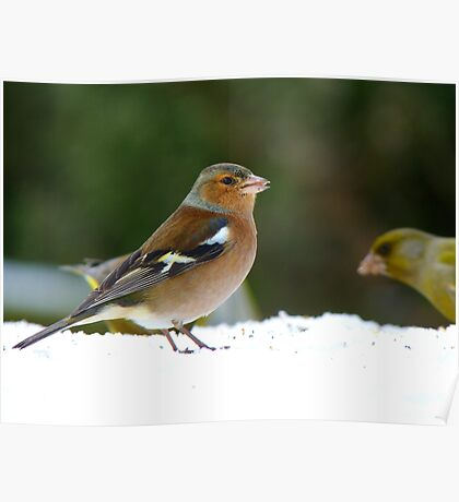 There Are Meagre Pickings Today! - Chaffinch - NZ Poster