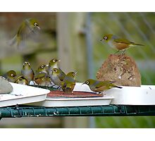 I Told You Buying A Trampoline Was A Bad Decision!!.. - Silver-Eyes - NZ Photographic Print