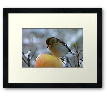 Awww!! Do I Really Have To Eat This - I Don't Need To Go On A Diet!! - Female Chaffinch Framed Print