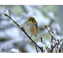 Annie Get Your Gun...There's No Business Like Snow Business! - Silver-Eye - NZ Photographic Print