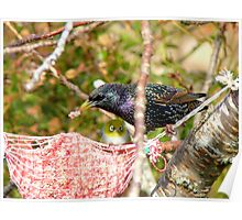 Ummm! Excuse Me Sir.. That My Food Your'e Eating - Starling - NZ  Poster