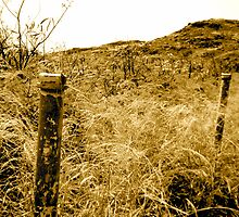 Memory of a fence by pbeltz