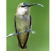 hummer sticking out tongue Photographic Print