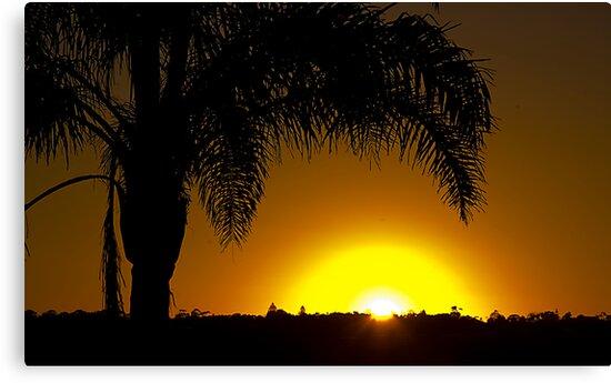 Merimbula Sunrise by Rosina  Lamberti