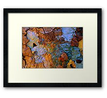 Every Tree Tells A Story Framed Print