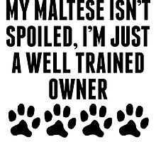 Well Trained Maltese Owner by kwg2200