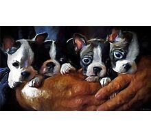 Safe In The Arms Of Love - Puppy Art Photographic Print