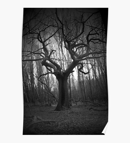 haunted tree Poster