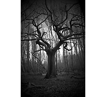 haunted tree Photographic Print