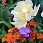 Colorful Flowers by Cynthia48