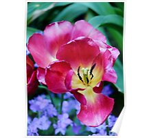 Pink, Yellow And Blue Flowers Poster